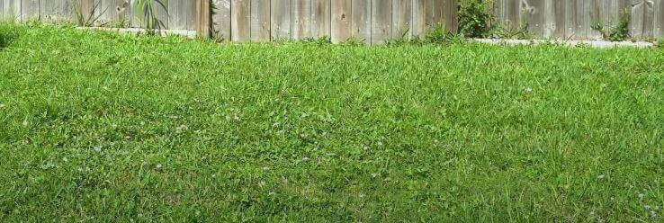 deck on grass
